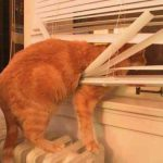 Don't Throw Away Those Broken Blinds – Let Us Repair Them!