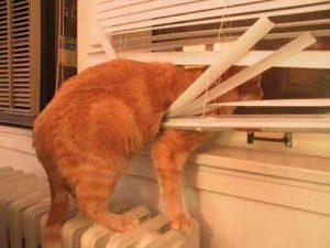 broken window blind