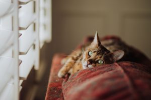 cat in the window blind cord pet safetly