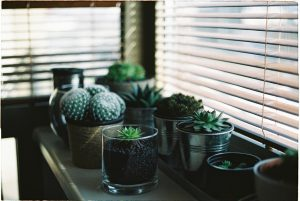 plants on window sill with blinds